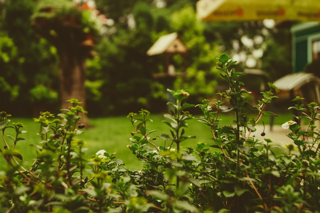 Buy or Sell a strip of garden land