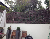Trellis Ivy Reduced