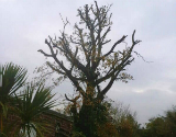Tree After It Has Been Pruned